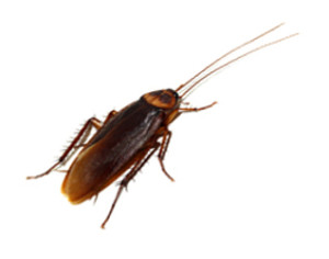 cockroach control fountain valley