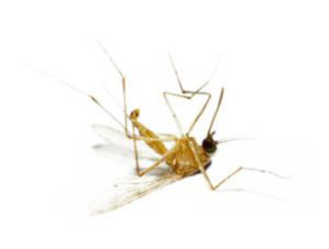 mosquito control fountain valley
